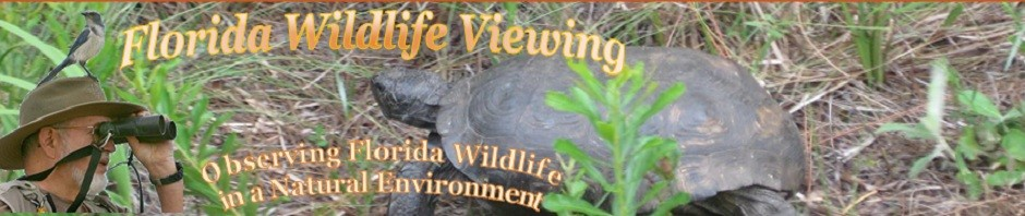 Wildlife Viewing